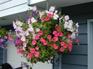 Hanging Basket Mix