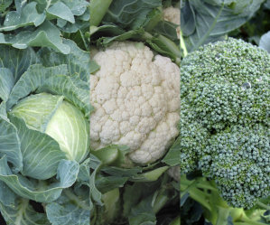 Mixed Veg 1 - Cabbage, Cauliflower, Broccoli