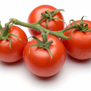 Tomato - Moneymaker