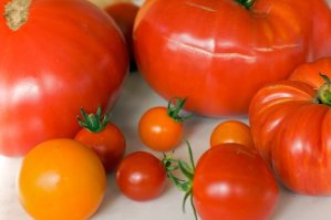 Tomato - Mixed Varieties