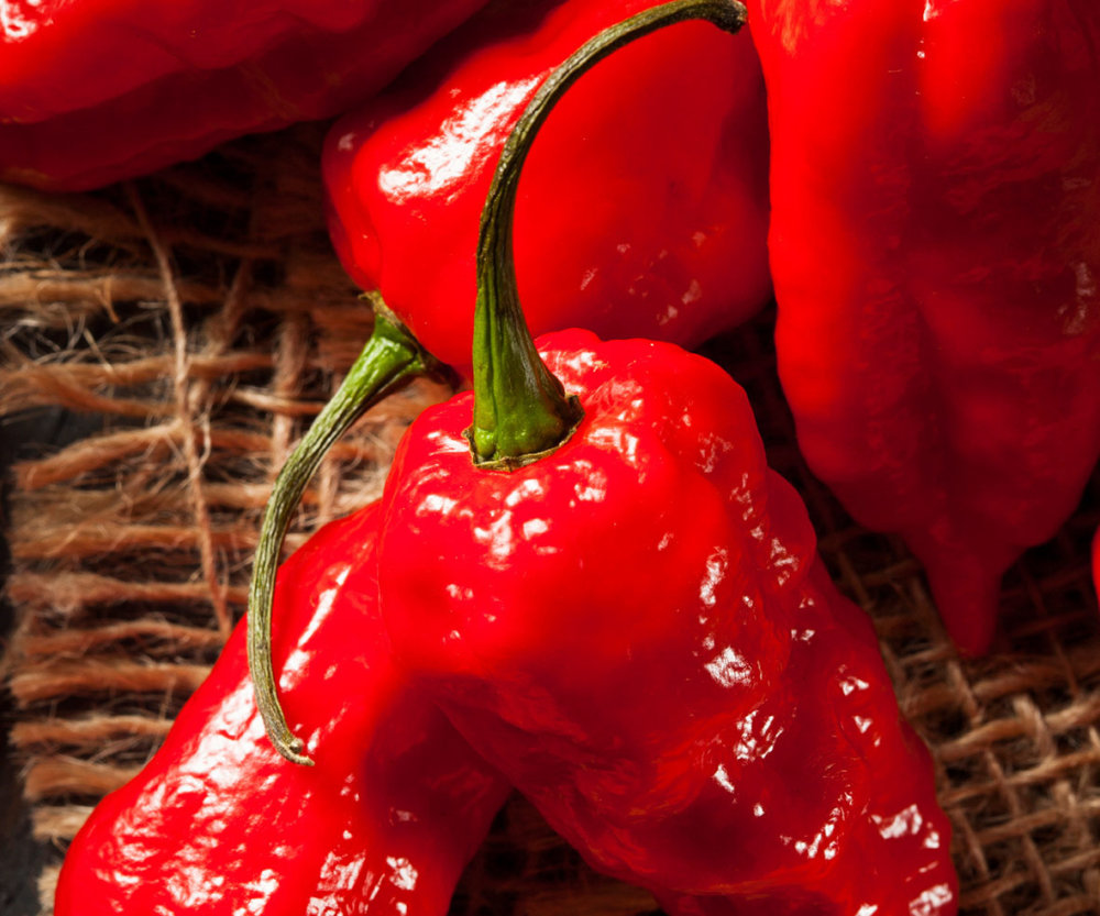 Chilli - Bhut Jolokia (Ghost Pepper)