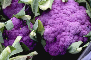 Cauliflower - Violet